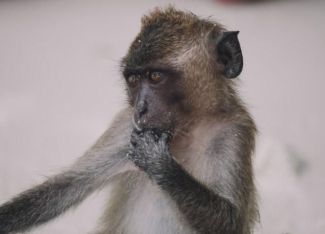 closeup photo of monkey
