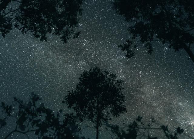 silhueta de árvores sob um céu estrelado