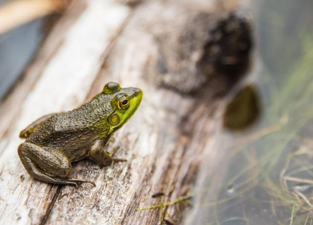 green frog in macro shot photography