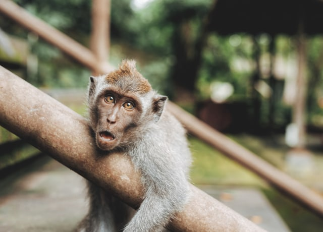 shallow focus photography of monkey hugging handrail