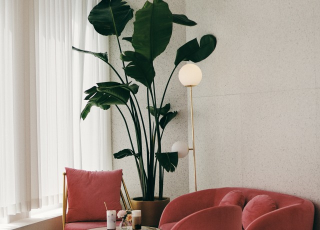 red leather sofa chair beside green indoor plant