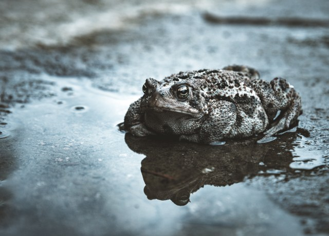 black frog on wet surface