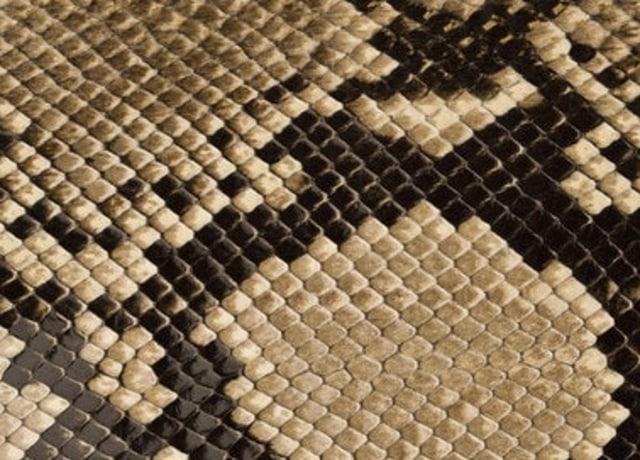 Escamas desenhadas em formatos que se sobrepõem umas nas outras para criar pontos marrons.