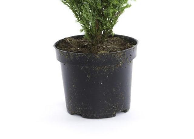 Vaso de planta normal