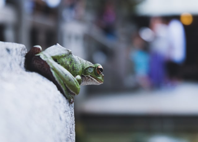 green frog on wall