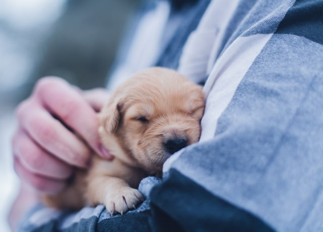 shallow focus photography of brown puppy during daytime