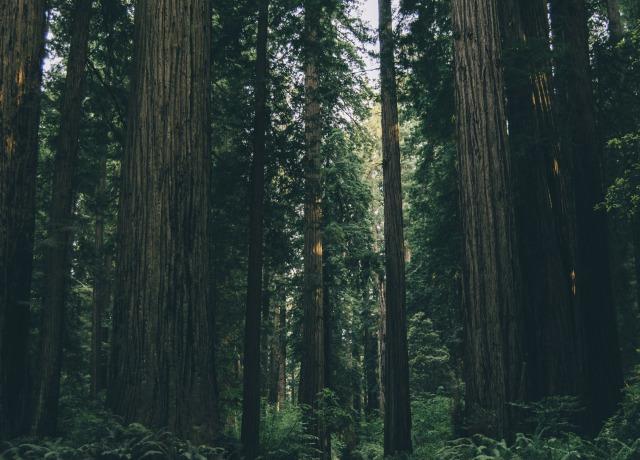 empty dirt road between trees