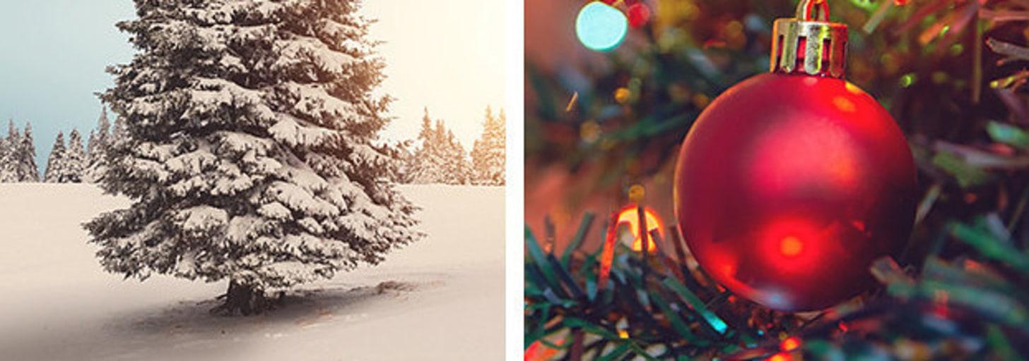 Monte uma árvore de Natal que vamos te dizer seu signo natalino