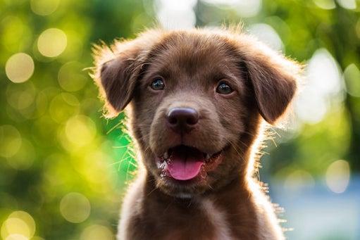 Dog looking happy