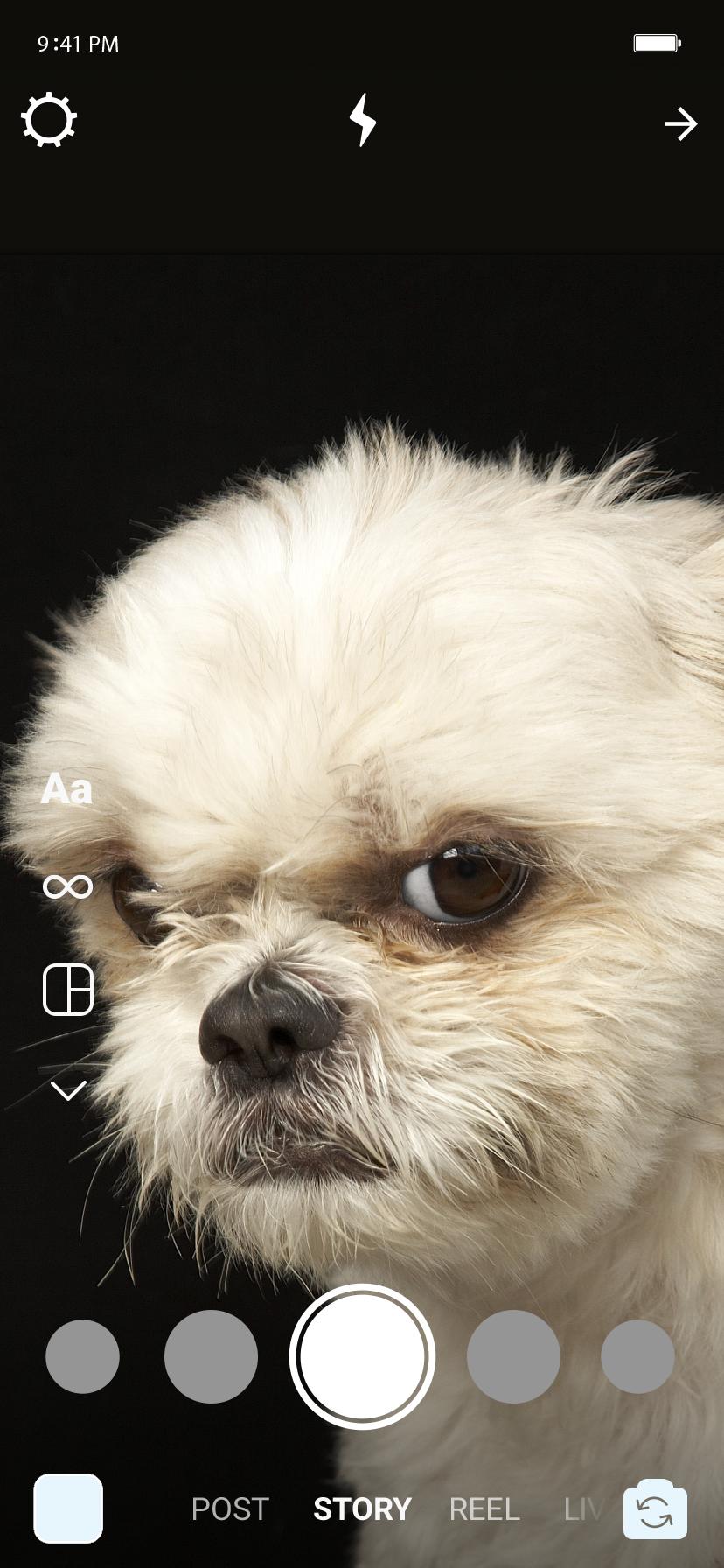 Dentro do Stories, um cachorro bravo