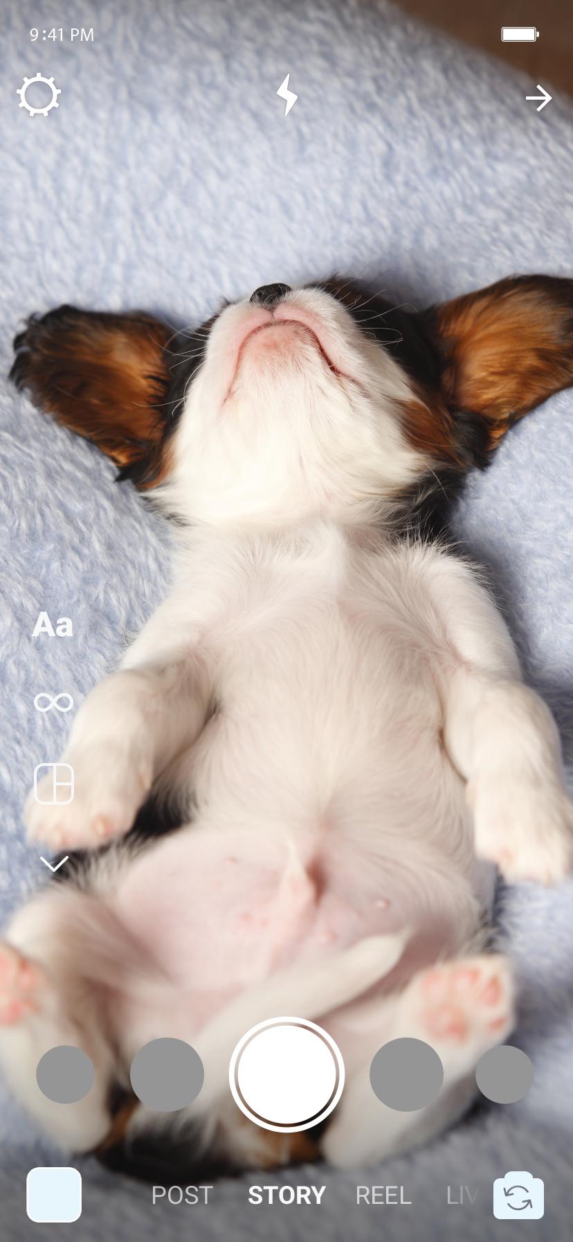 No stories, um cachorro dormindo.
