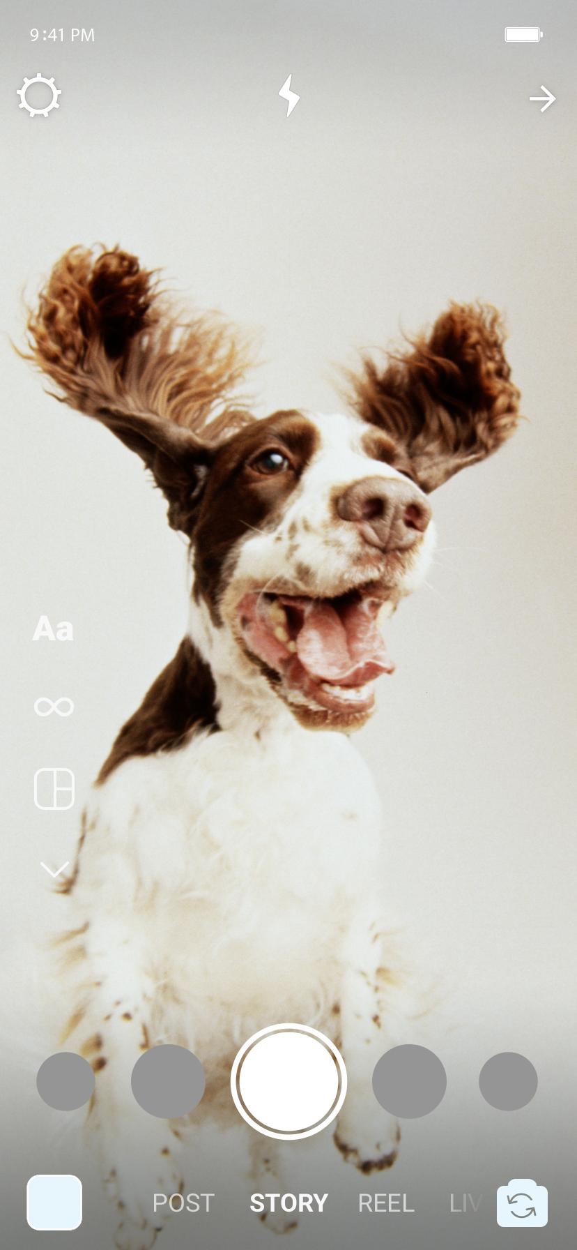 No stories, um cachorro pulando de boca aberta