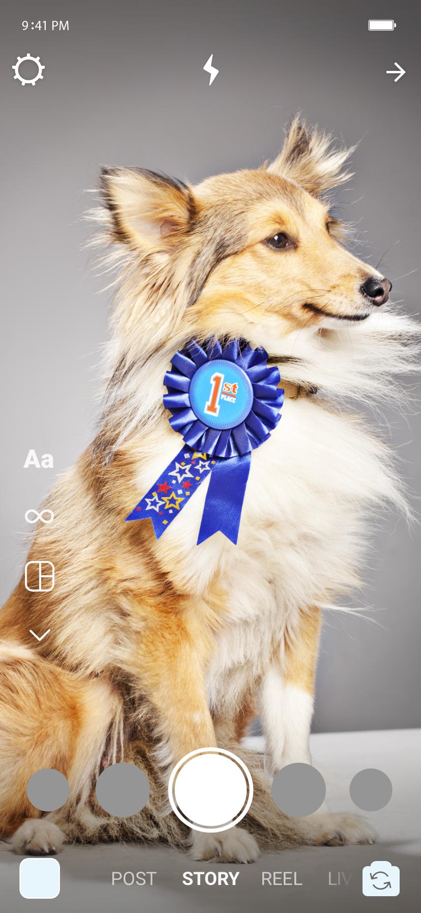 No stories, um cachorro com medalha de nº1.