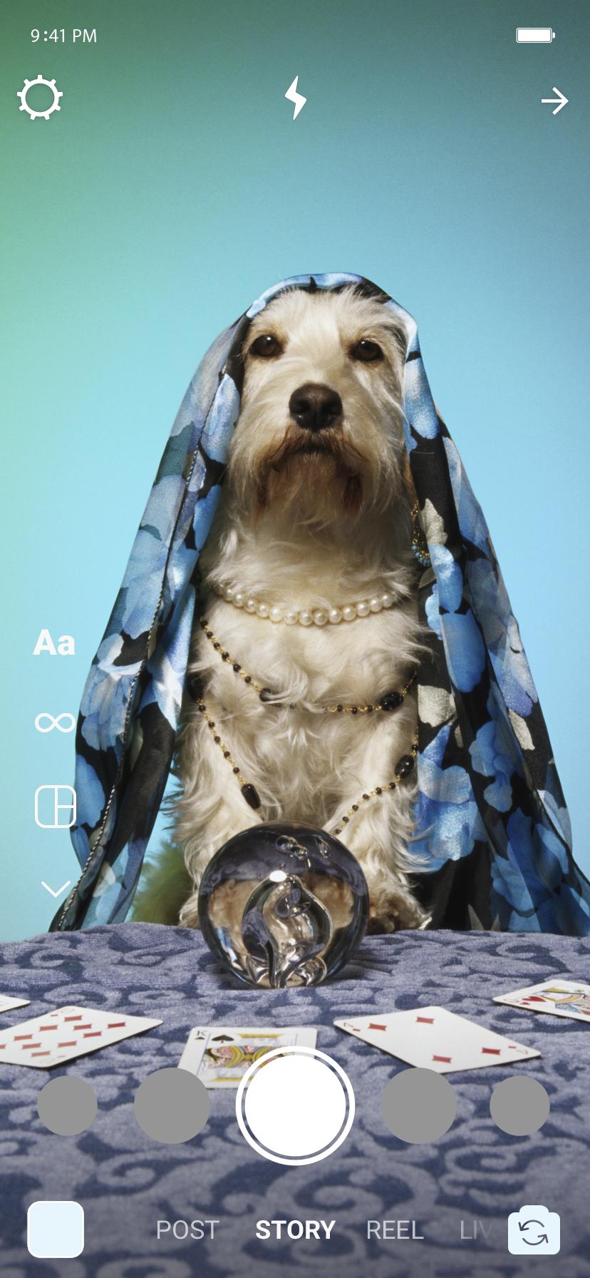 No Story, um cachorro com um pano na cabeça. Em sua frente temos uma bola de cristal e cartas de baralho.