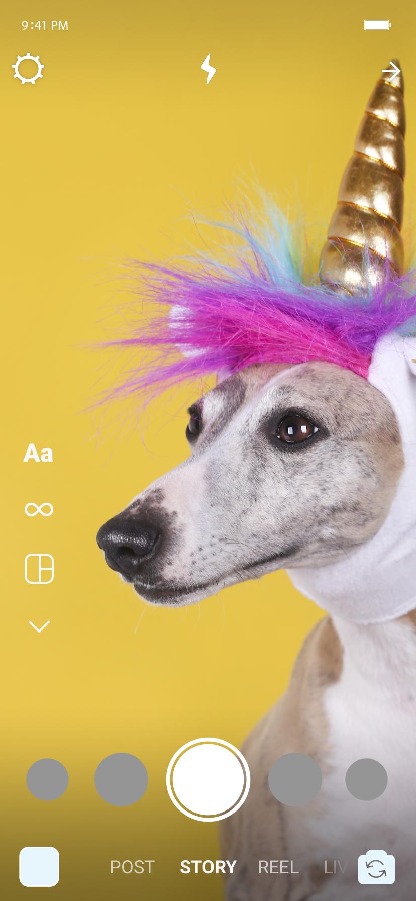 No story, um cachorro com olhar distante, enquanto veste uma roupa de unicórnio.