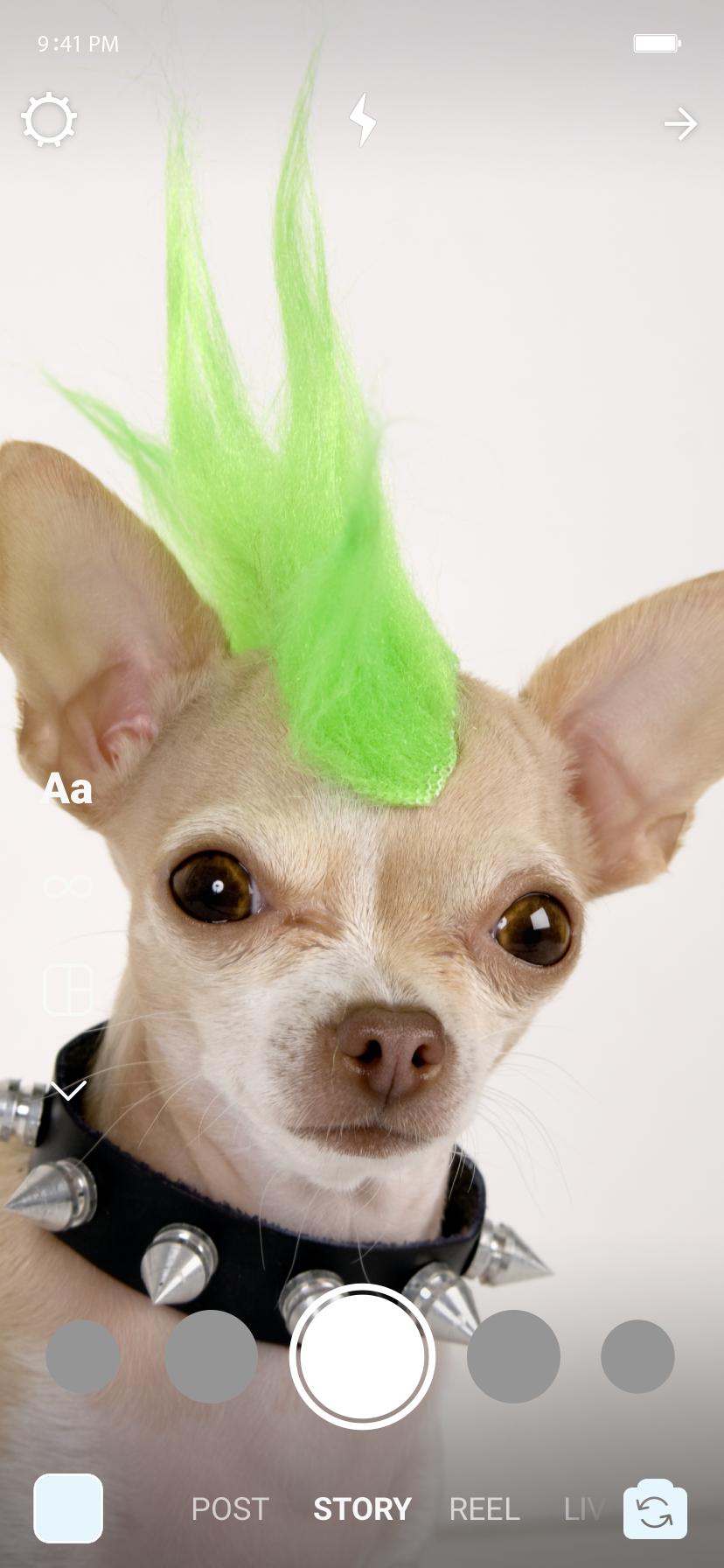 Cachorro com uma peruca moicana verde, e uma coleira de espinhos punk.
