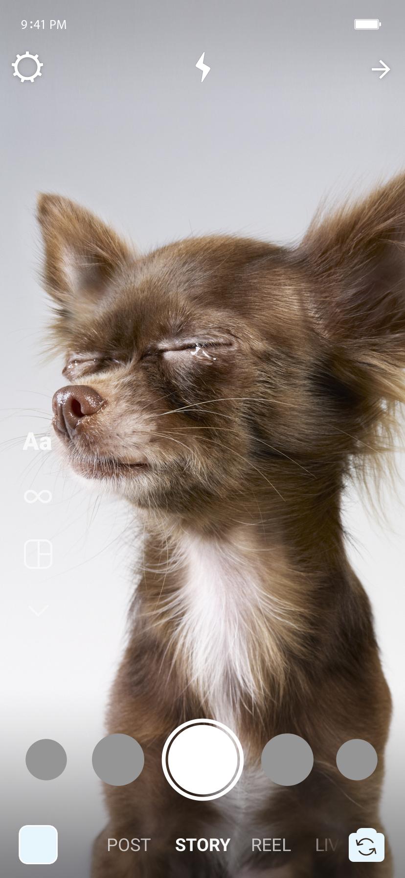 No story, um cachorrinho com os olhos fechados e uma lágrima sobre suas páltebras.