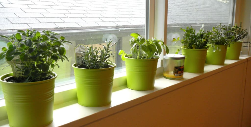 Windowsill-Herb-Garden