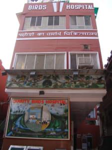 -Birds-Hospital-Delhi-768x1024