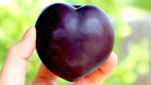 plum-powerful-multivitamin-for-your-heart