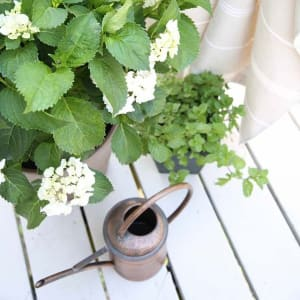 8. Beautify with pest replicating plants