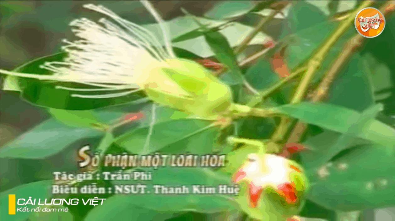 Số phận một loài hoa