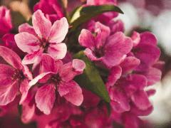 PlantGrowPick -Planting Tips - Australian Flowers