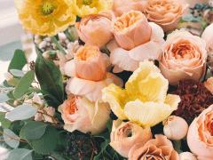 Plantgrowpick | Amazing Variety of Roses in Austra