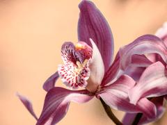 Plantgrowpick-Grow Orchids for Profit