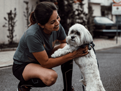 Stephanie Taunton | Hiring A Good Dog Trainer