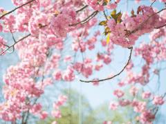 Plantgrowpick Spring Garden Care Tips