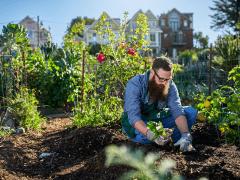 Plantgrowpick - 5 Secrets About Good Pear Harvest