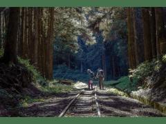 山林漫遊者