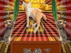 家貓是皇上