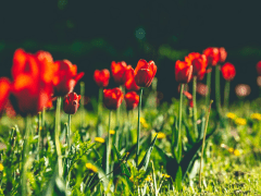 Plantgrowpick Share Tips to Improve your Garden