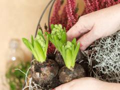 Plantgrowpick | How Beginners can start Gardening?