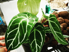 Discover best free photographs of Plantgrowpick