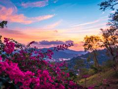 Wendi Dodson Houston – Mountain Flowers
