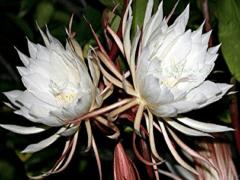 Plantgrowpick | Trendy Plants that you can choose