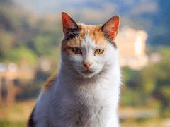 Cat in HoTong