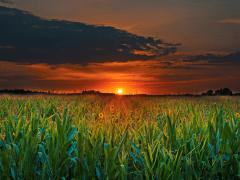 Plantgrowpick - Why you should create a Behance Ac