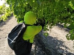 How Does Plantgrowpick Pty Ltd Labour Hire Company