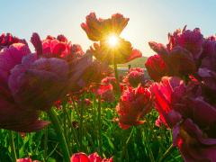 Plantgrowpick-Quick Garden Improving TipsWordpress