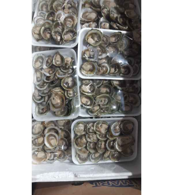 Bandeja de ostras chilenas