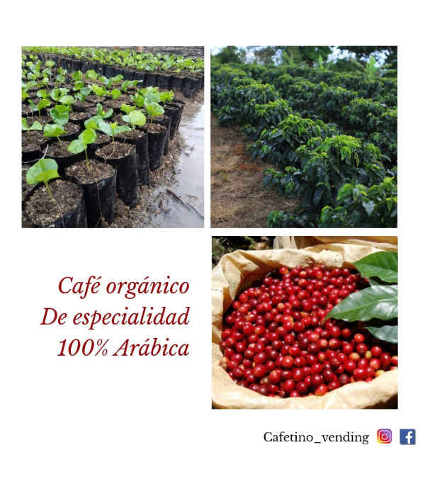 Café Chanchamayo PERÚ Formato 400 g - Orgánico de especialidad
