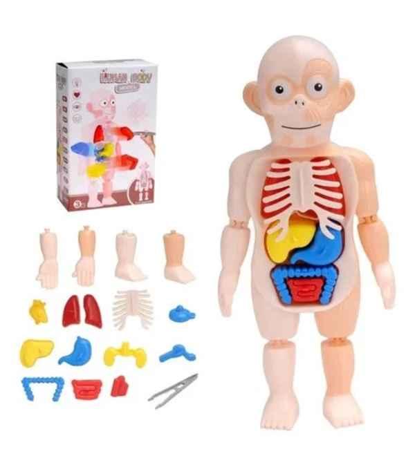 Juguete Modelo De Cuerpo Humano Para Niños 3d Cuerpo Rompecabeza
