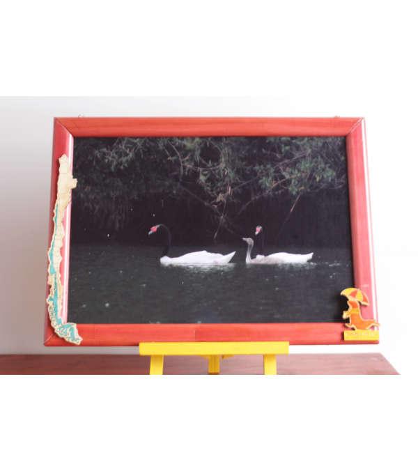 Cuadro fotografico Fauna SIlvestre