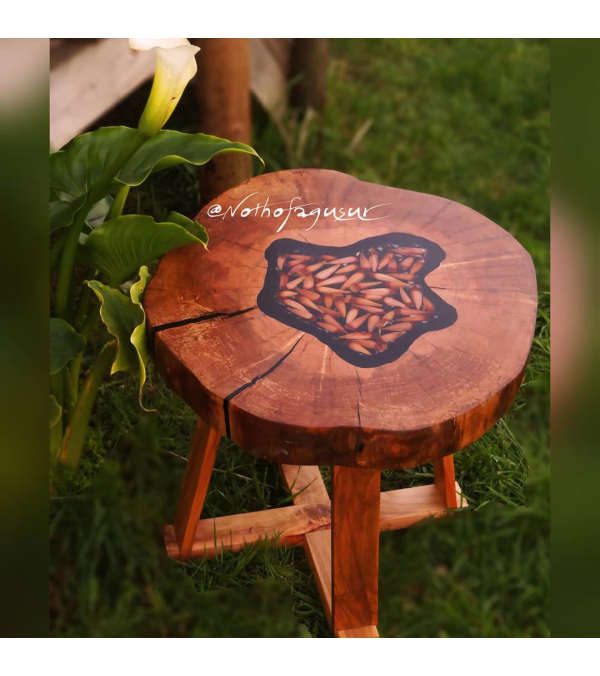 Mesa de madera nativa con piñones encapsulados