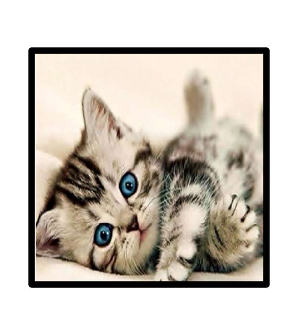 Pintura de Diamantes Diamond Painting gatito recostado 30x30 cms