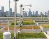 university of toronto green roof research